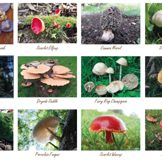 Greatest British Foraging Calendar Wild Food UK